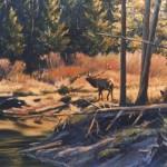Buffalo Fork - Elk