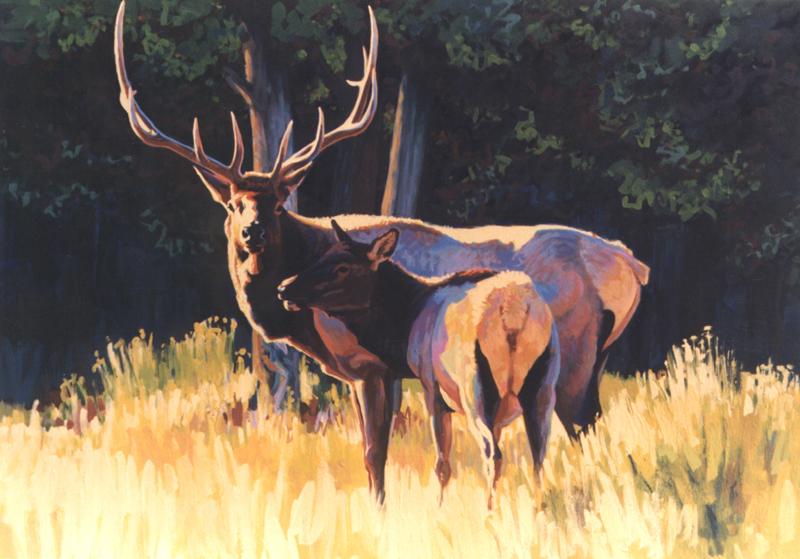 Courtship Elk