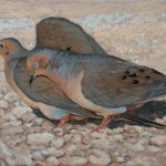 Courtship Mourning Doves