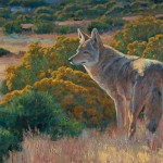 Coyote in Chamisa