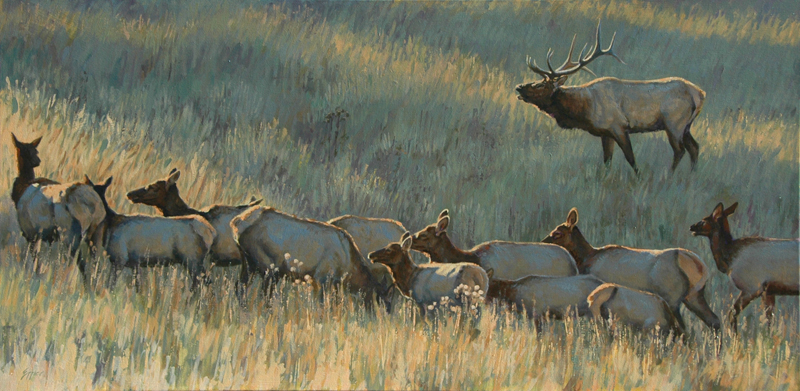 Evergreen Morning- Elk