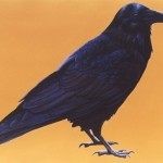 Genesis - Raven