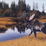 Moose & Trout