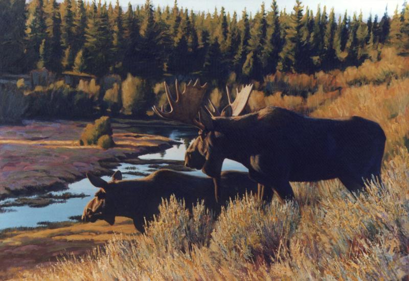 Morning Light - Moose