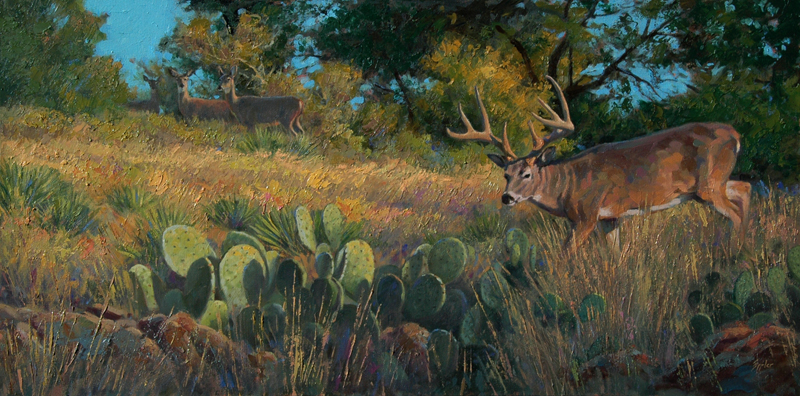 Texas Morning  II - Whitetail