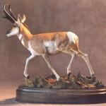 Big Sky - Pronghorn Antelope
