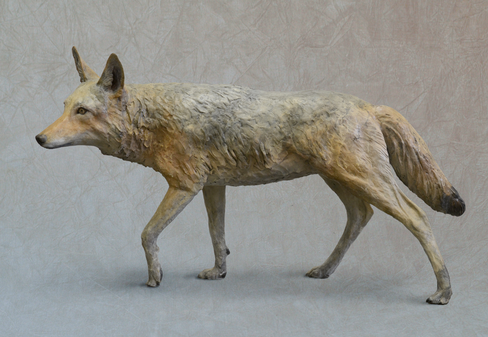 Coyote-Life-size