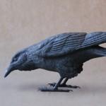 Raven B