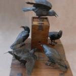 Ravens Cast Their Vote