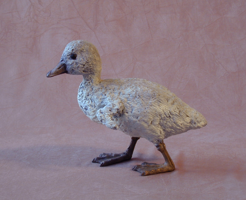 Trumpeter Cygnet Walking