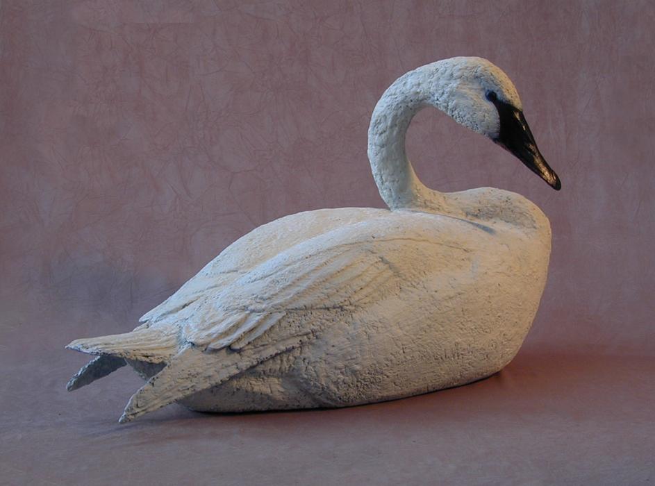 Trumpeter Swan Sitting