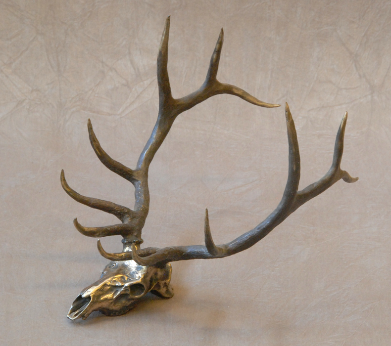 Elk skull drawing - photo#3