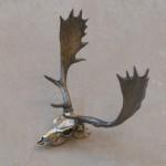 Fallow Deer Skull
