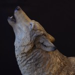 Wolf I Night Song (head shot)
